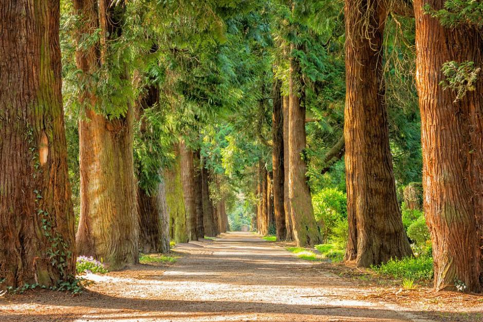 Mysłowice dzięki funduszom unijnym odnowią swoje parki