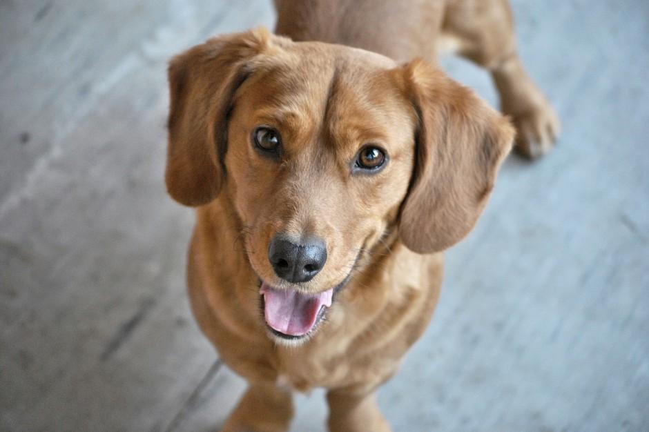 """Krosno: Większy podatek za """"niezaczipowanego"""" psa"""