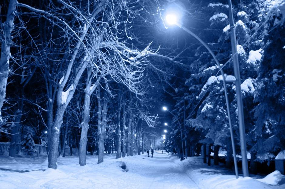 Łódzkie: Powalone drzewa i brak prądu po silnych opadach śniegu