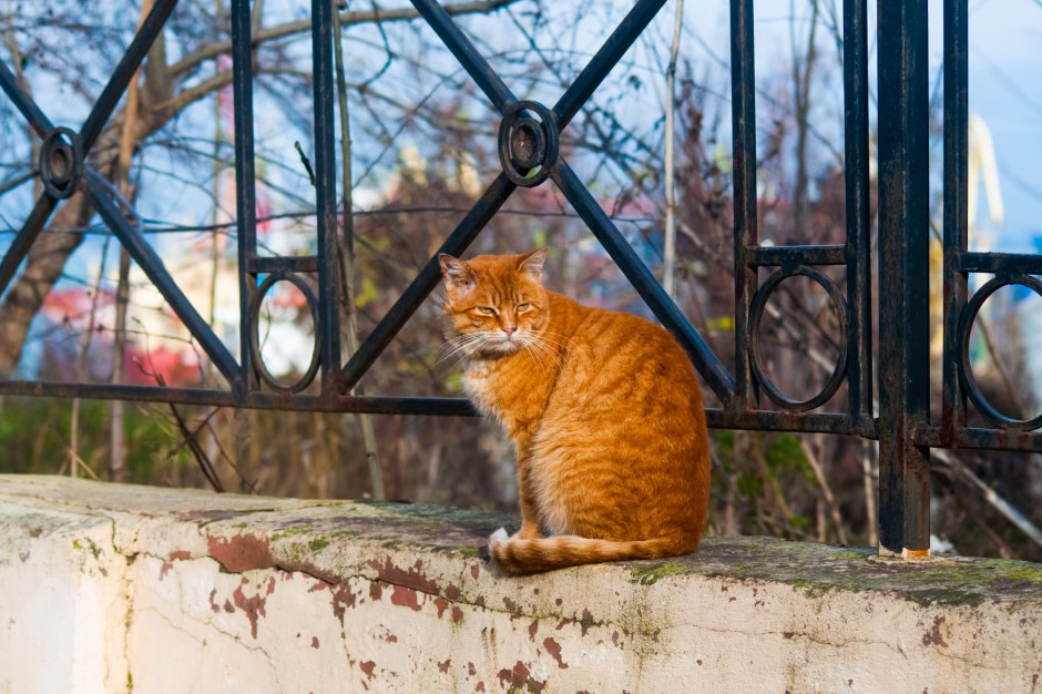 Wolno żyjące koty są pożyteczne. Zimą potrzebują pomocy człowieka