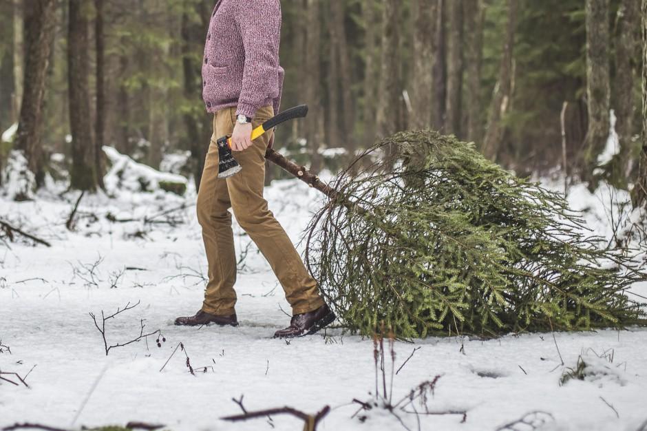 Śląskie. Policjanci i strażnicy leśni pilnują choinek