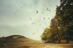 Silny wiatr łamie drzewa i zrywa dachy