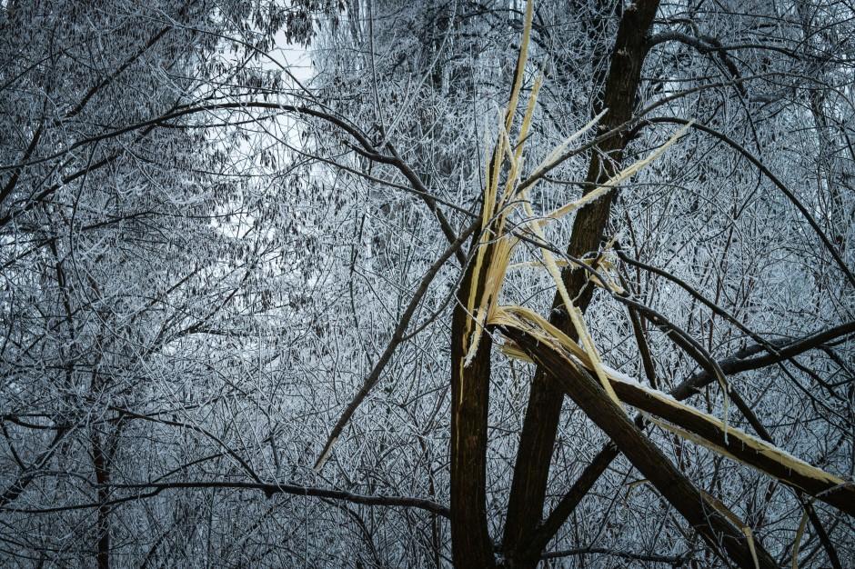 Podkarpackie, wiatr: Połamane drzewa i zerwane dachy. Są poszkodowani