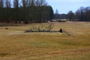 Silny wiatr sieje spustoszenie w Małopolsce