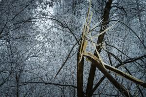 Podkarpackie: Silny wiatr połamał drzewa. Mieszkańcy bez prądu