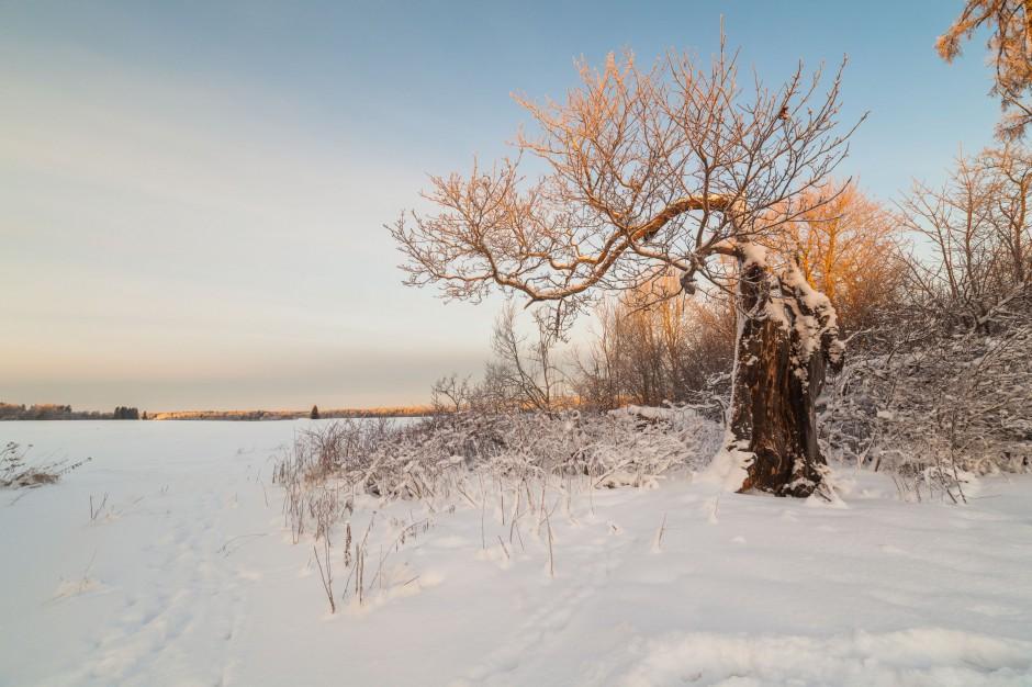 Wiatr i śnieżyce w Polsce: Brak prądu, połamane drzewa i zerwane dachy