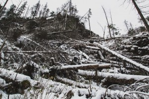 Halny powalił drzewa i uszkodził dachy. Mieszkańcy bez prądu
