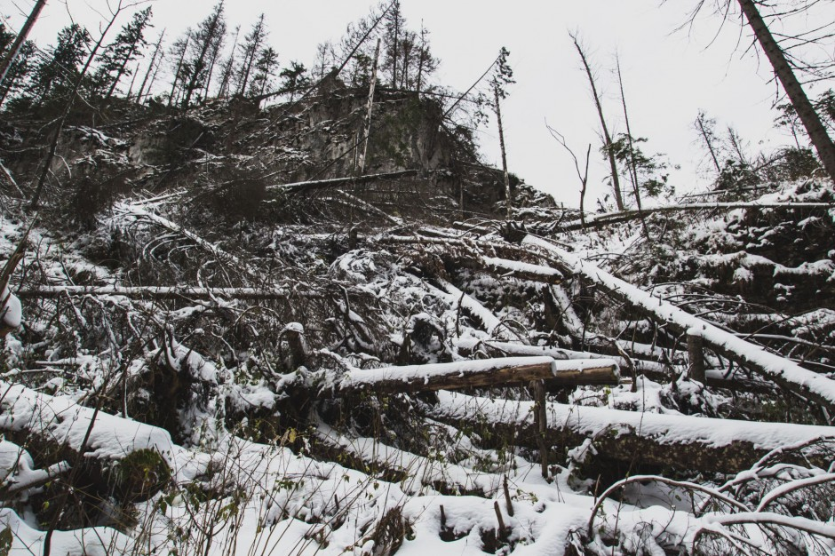 Beskidy: Wiatr halny powalił drzewa i uszkodził dachy. Mieszkańcy bez prądu