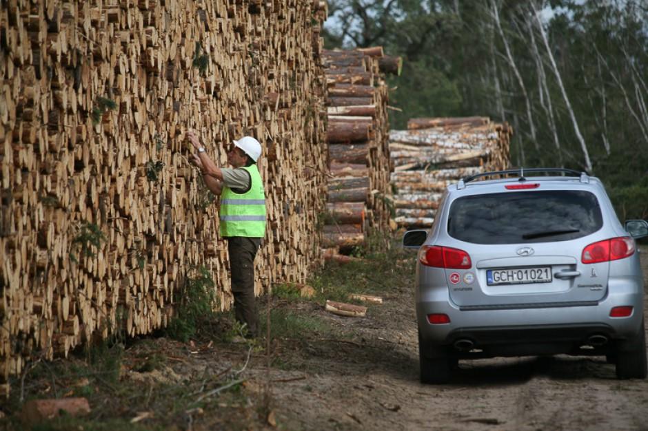 Leśnicy cały czas walczą ze skutkami sierpniowych wichur. Drewno dużo tańsze