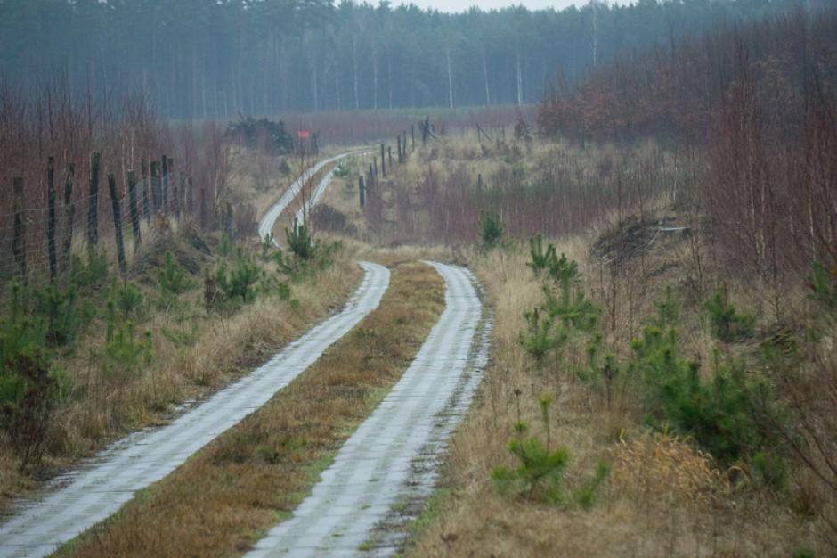 Beskidy: Halny powalił ponad 70 tys. metrów sześciennych drzew