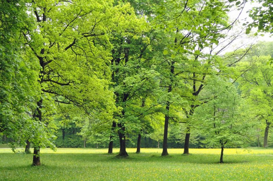 MŚ i NFOŚiGW wspierają zieleń miejską. Tym razem kwotą 20 mln zł
