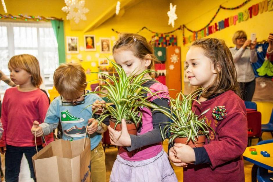 Rośliny odświeżą powietrze w przedszkolach? Kraków ma nowy pomysł