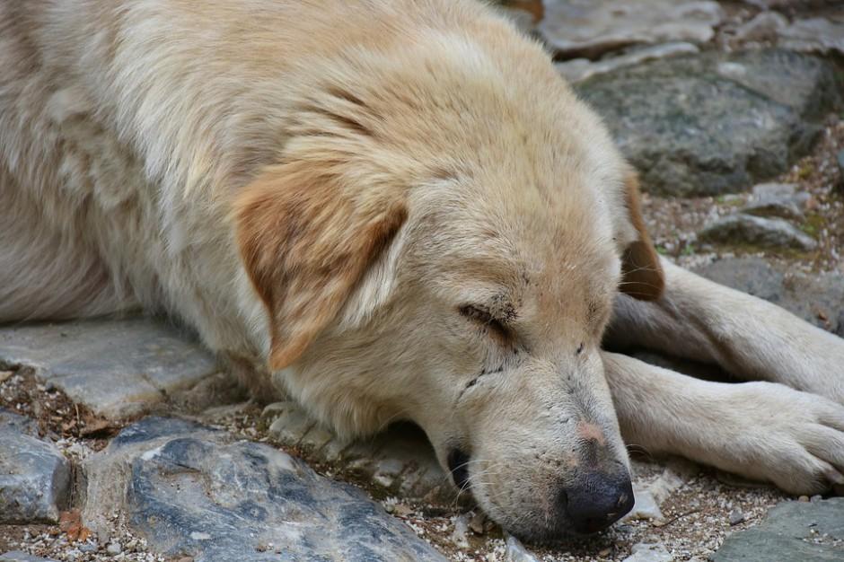 Uchwała w sprawie programu opieki nad zwierzętami bezdomnymi ma być ogłoszona w Dzienniku Urzędowym