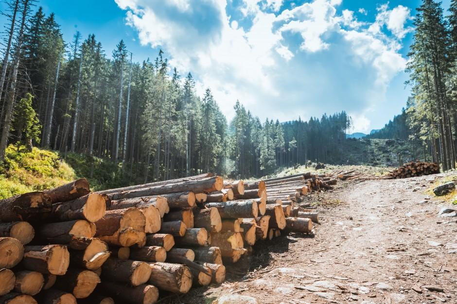 Tatrzański Park Narodowy podsumował straty po niszczycielskim halnym