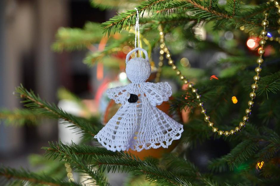 Kraków. Rusza zbiórka żywych bożonarodzeniowych choinek