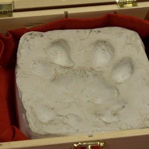 W tym roku Gdańsk wystawił do licytacji 15 propozycji. Zwycięzca jednej z nich będzie miał możliwość nadania imienia lwicy, jednej z czworga maluchów, które niedawno urodziły się w Gdańskim Ogrodzie Zoologicznym. Inna z aukcji dotyczy piłki z autografem króla strzelców - Roberta Lewandowskiego. Jest też pióro wieczne, którym prezydent Paweł Adamowicz podpisał w październiku 2017 roku, umowę finansująca in-vitro dla mieszkańców. - Wspieram WOŚP całym sercem. Sam zresztą będę w niedzielę kwestować na ulicach Gdańska na rzecz wyrównania szans w leczeniu noworodków. Uważam, że udział w takiej akcji to swoista lekcja patriotyzmu i dobroczynności. Dla każdego. Gdańszczanki i gdańszczanie co roku chętnie biorą w niej udział. Kultura dzielenia jest u nas popularna i cały czas się rozwija - mówi prezydent Gdańska.(fot. gdansk.pl)