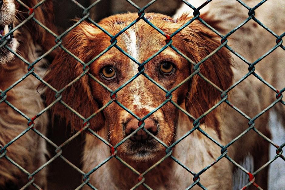 Krzysztof Czabański: Schroniska dla zwierząt to umieralnie chronione przez lokalny aparat władzy