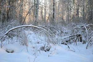 Połamane drzewa i brak prądu po opadach śniegu w zachodniopomorskim