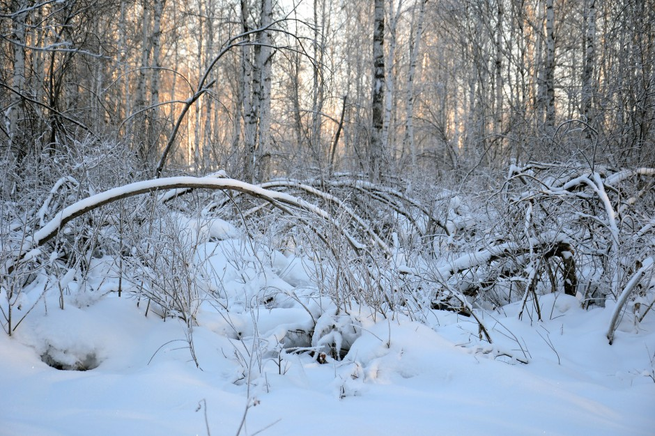 Wichury nad Polską, zachodniopomorskie: Połamane drzewa i brak prądu po opadach śniegu