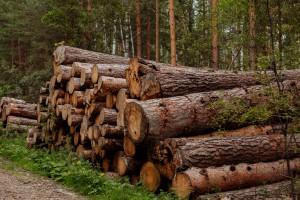 Słupsk chce pokaźnej kwoty od miejskiej spółki za wycinkę drzew