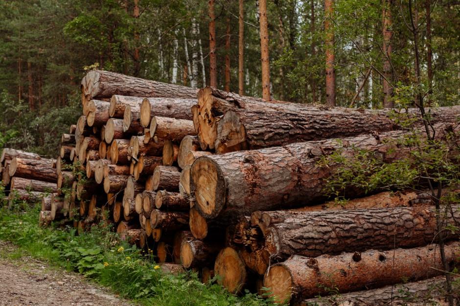 Słupsk chce 1,5 mln zł od spółki miejskiej za wycinkę drzew - sprawa jest w NSA