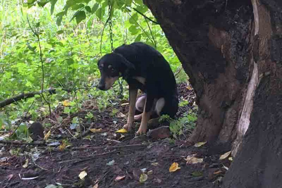 Bezdomne i dzikie zwierzęta coraz większym wyzwaniem straży miejskiej