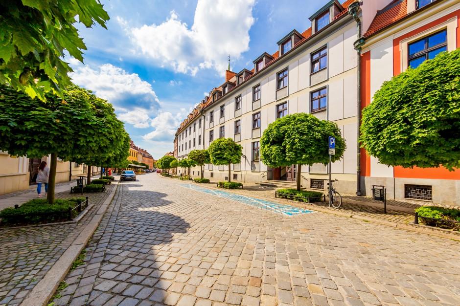 Wrocław. W tym roku zostanie posadzonych niemal 7 tys. drzew