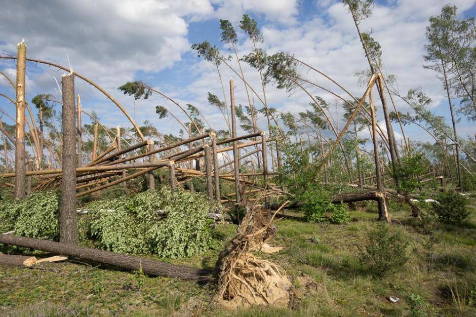 Nawałnice i wichury: Lasy Państwowe porządkują tereny po wichurach. Co z drewnem?