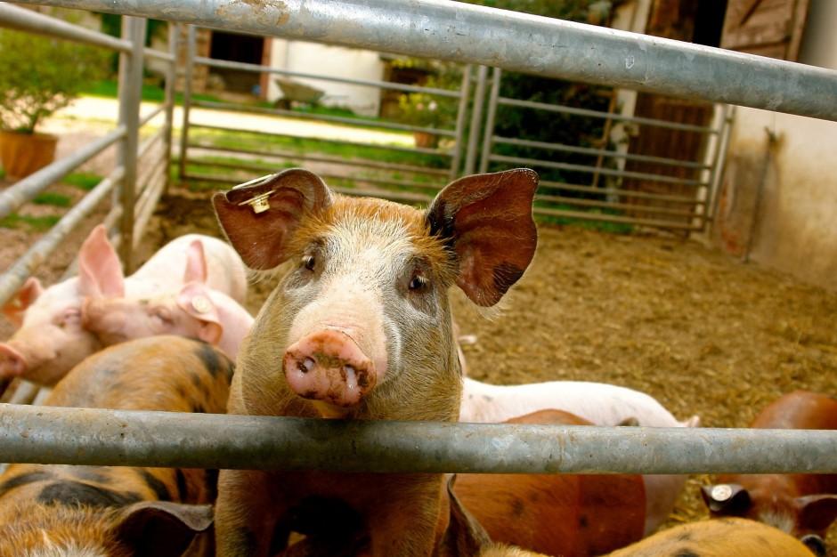 Nowe zasady bioasekuracji obowiązkowe dla gospodarstw