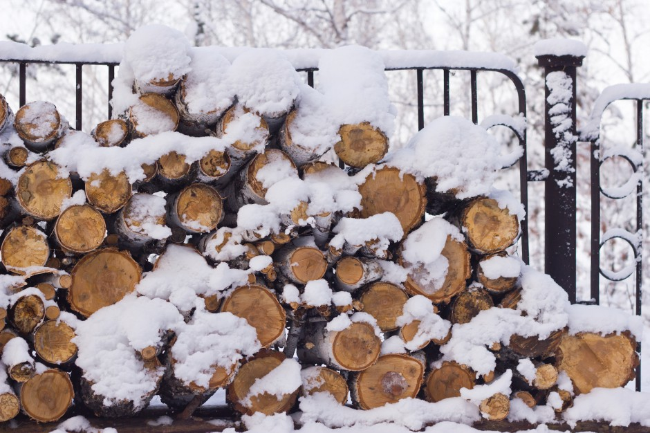 Podkarpaccy leśnicy chcą pozyskać więcej drewna w 2020 roku