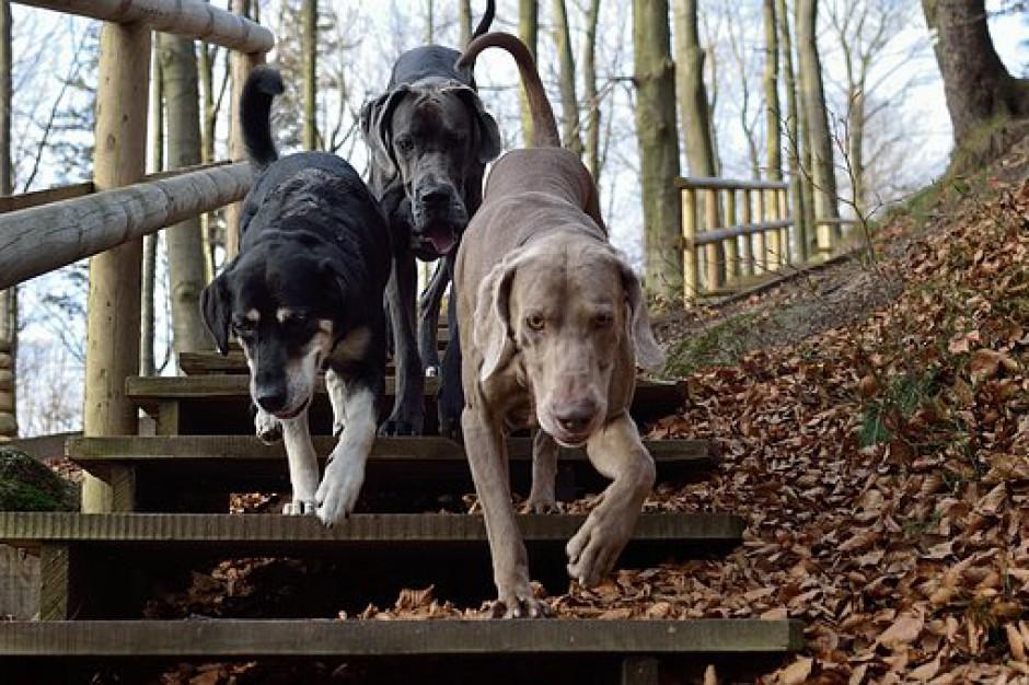 Prezes NIK: rośnie liczba bezdomnych psów i kotów