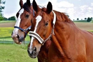 Jarmark koni pod okiem obrońców praw zwierząt