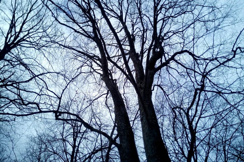 Wycinka drzew: Posłowie proponują ważną zmianę