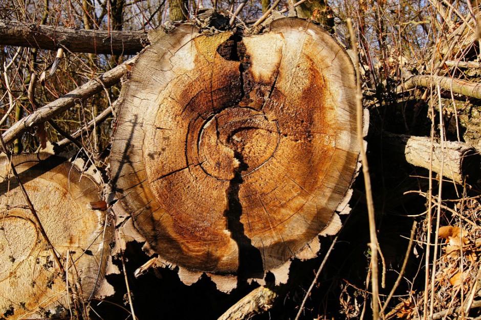 Wycinka lasu w Łebie: Decyzja prokuratury niebawem