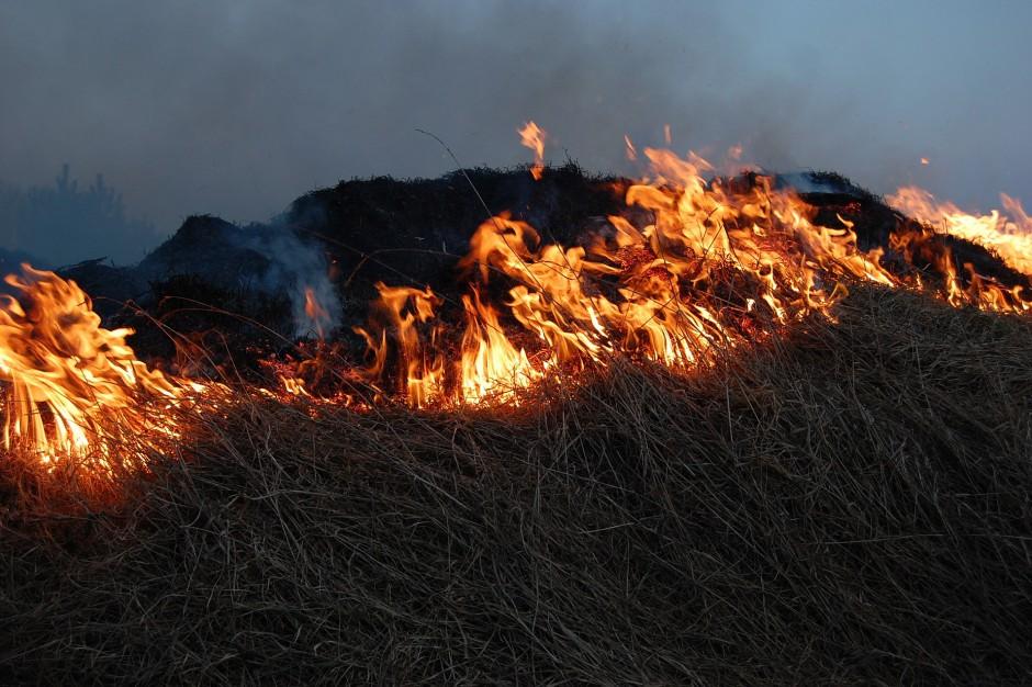 Za wypalanie traw kara grzywny, a nawet więzienie