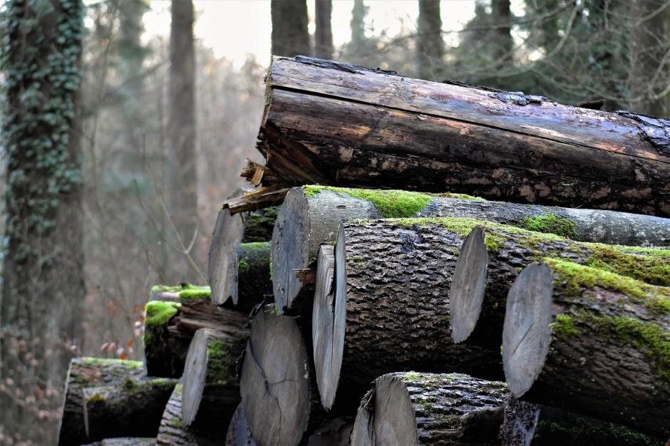 "Lasy Państwowe: ""Huragan stulecia"" obniżył ceny drewna"