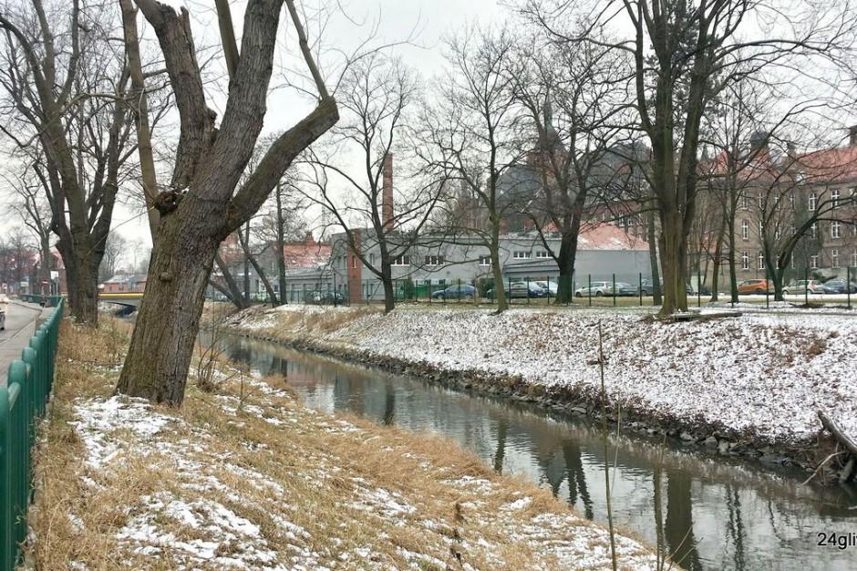 Gliwice: Radni odbiorą drzewom status pomnika przyrody? Ekolodzy alarmują
