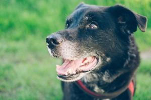 NIK skontroluje schroniska dla zwierząt?