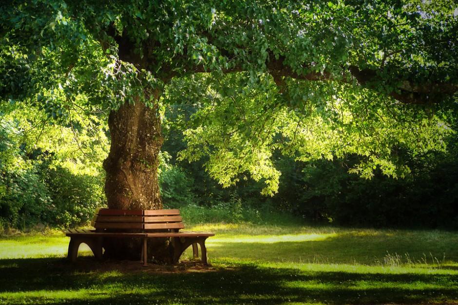 Koszalin wypięknieje. 4 mln unijnej dotacji na rewitalizację parku