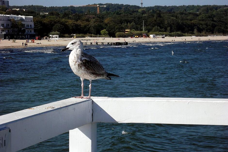 Pomorskie: O 40 proc. wzrosło zainteresowanie noclegami w regionie