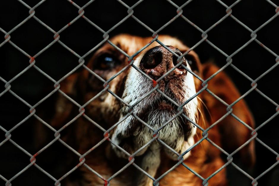Schroniska: 100 tys. bezdomnych zwierząt szuka domu