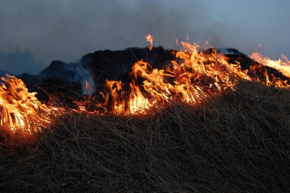 Wypalanie traw na Podkarpaciu. 120 pożarów w ciągu jednej doby