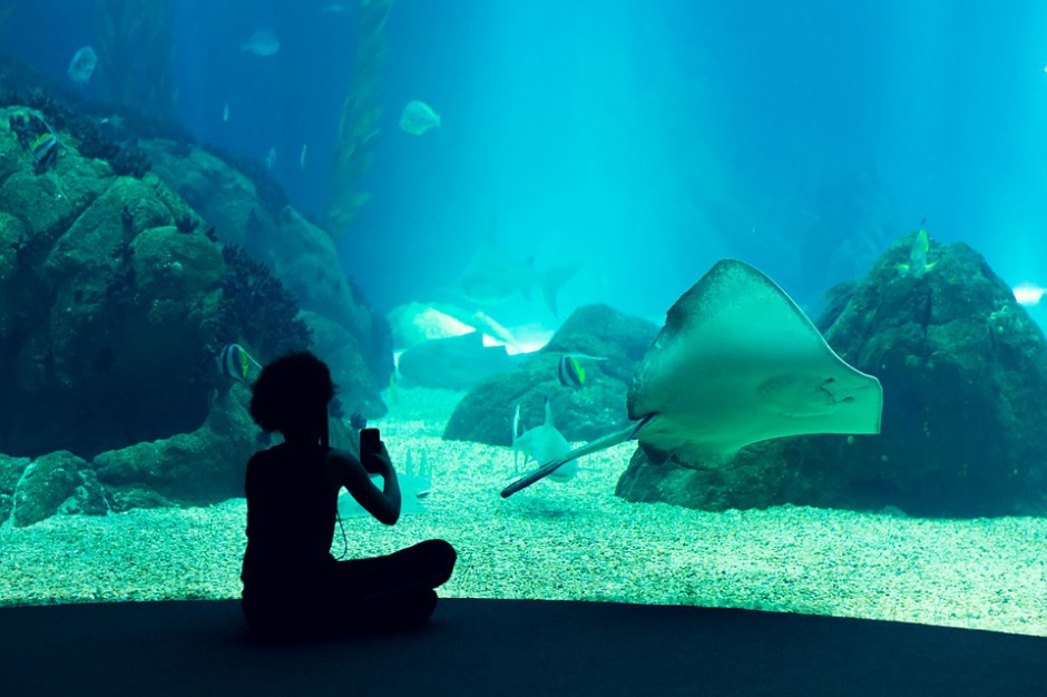 Jeszcze w tym roku może się zacząć budowa oceanarium w Gdańsku