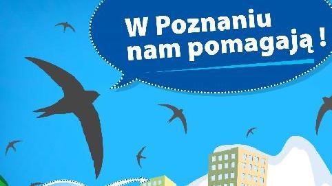 Grafika UM Poznań