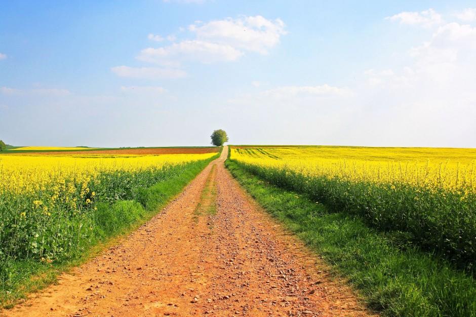 Ministerstwo przedstawiło strategię dla rozwoju wsi