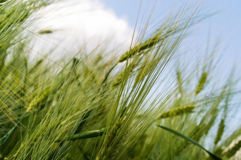 ASF: Rząd pomoże zagrożonym gospodarstwom rolnym