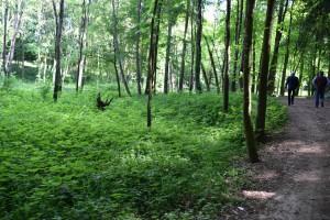 Miliony na rewitalizację zabytkowego parku w Świdwinie