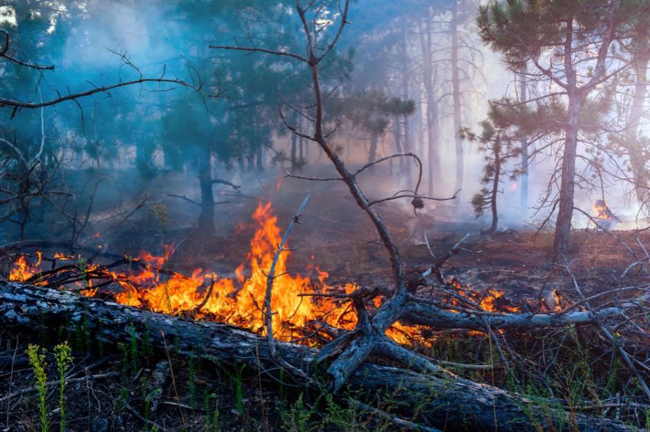 Rzecznik PSP: najwyższy stopień zagrożenia pożarowego w większości lasów w Polsce