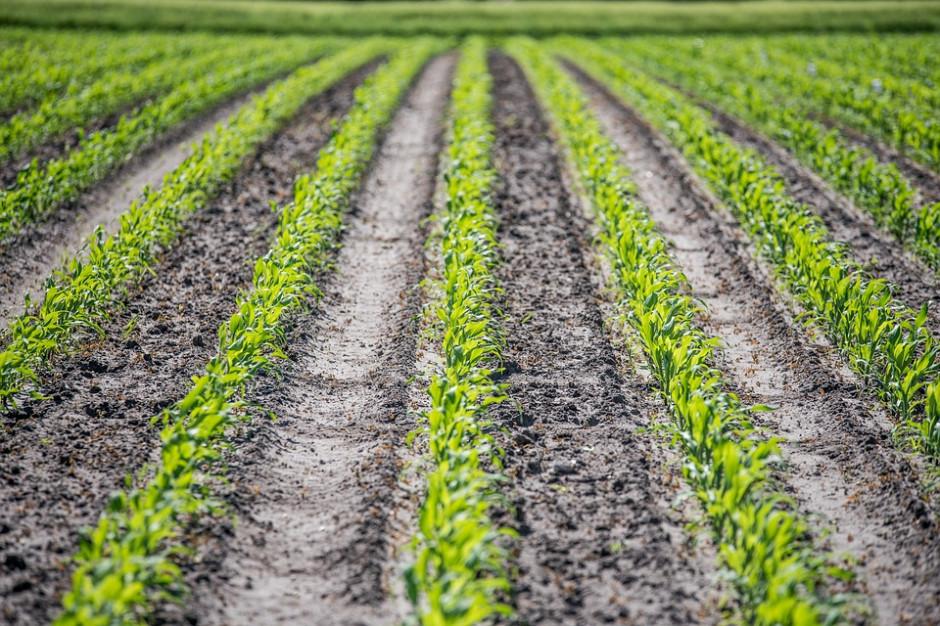 PSL apeluje do włodarzy. Prosi o ulgę albo umorzenie części podatku rolnego