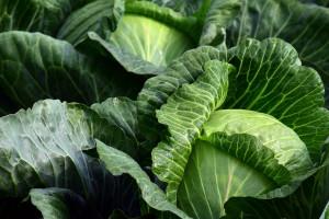 Po co w parku warzywniak? Odpowiedź znajdziecie na północy Polski